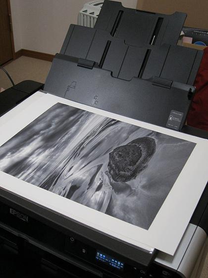 20111211-cosmos.jpg